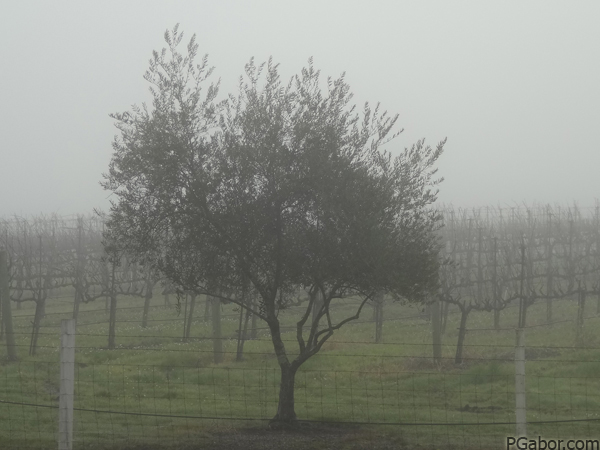 An Apple Tree in the Fog – Picture of the Day 024 (01/24)