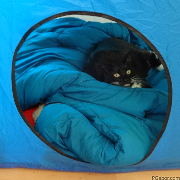 Cat in a Tent – Picture of the Day 027 (01/27)