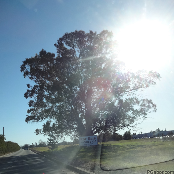 Tree for Sale – Picture of the Day 045 (02/14)