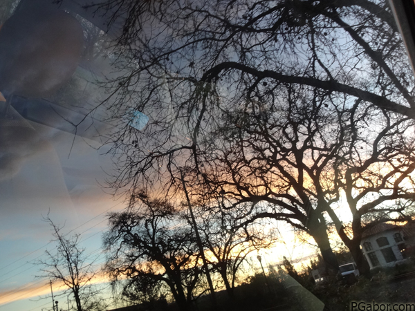 Reflected Trees – Picture of the Day 074 (03/15)