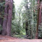 Passing redwoods